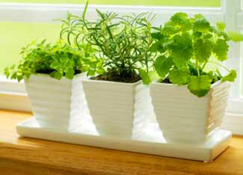 recession gardening