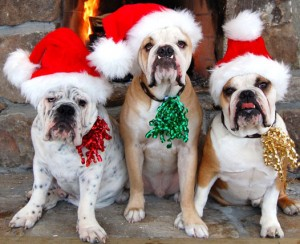 holiday-pets-new