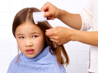 picture of girl combing for lice