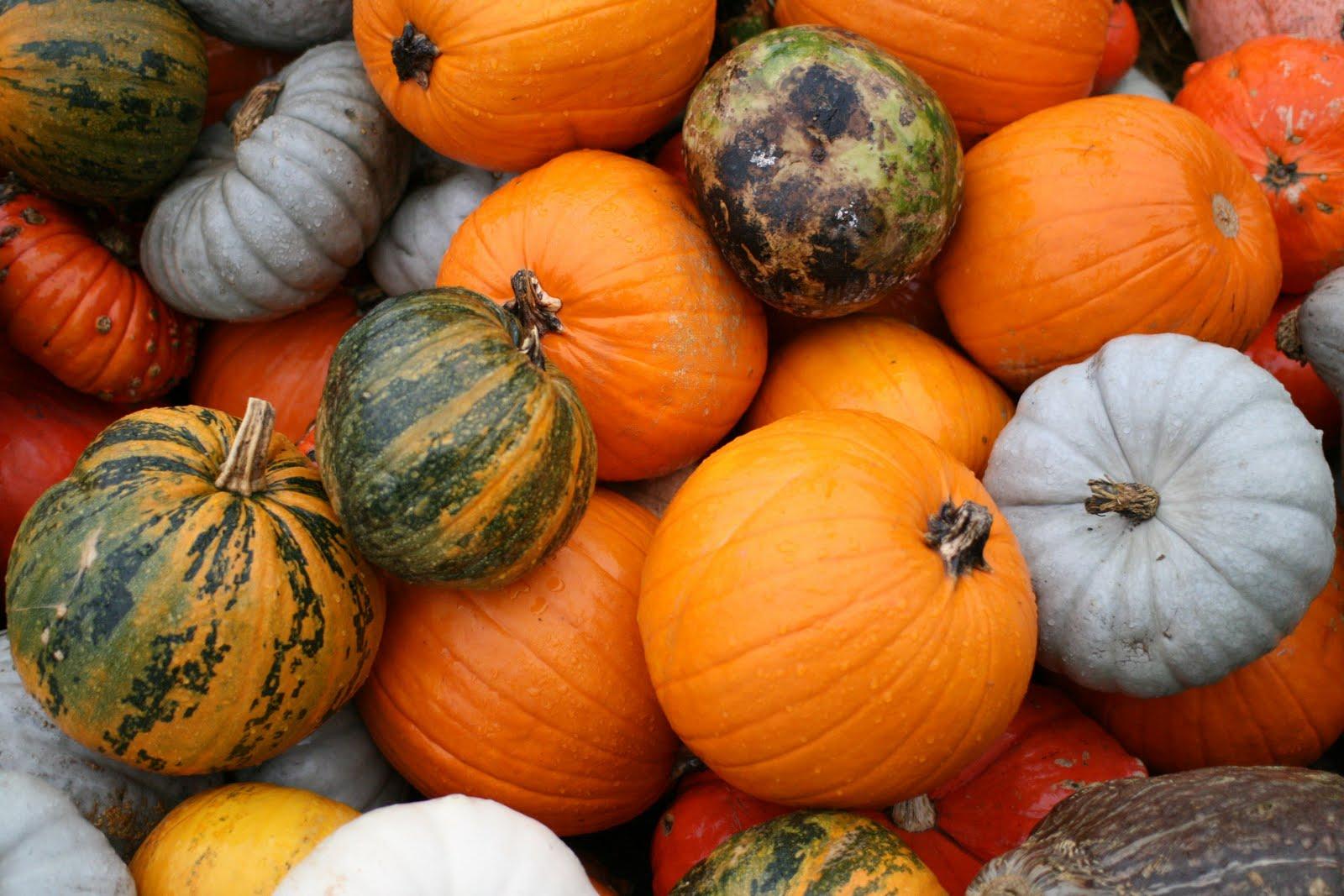 TonsofPumpkins