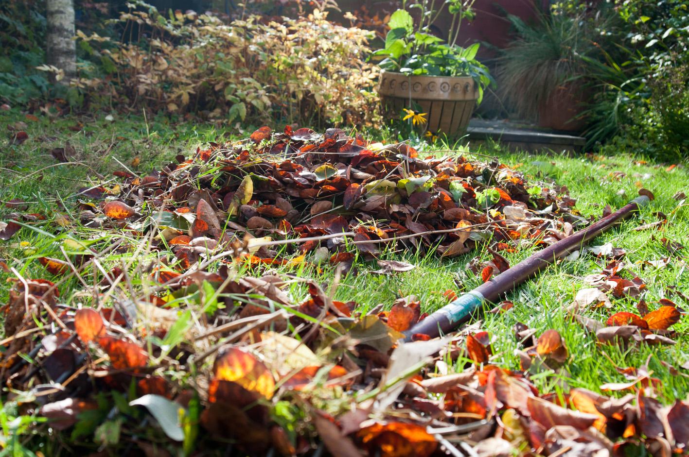 raking+leaves